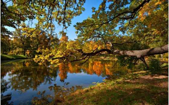 осень, природа, trees, пруд, телефон, лес,