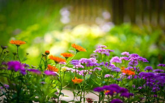 cvety, разноцветные, зелёный, тюльпаны, широкоформатные,