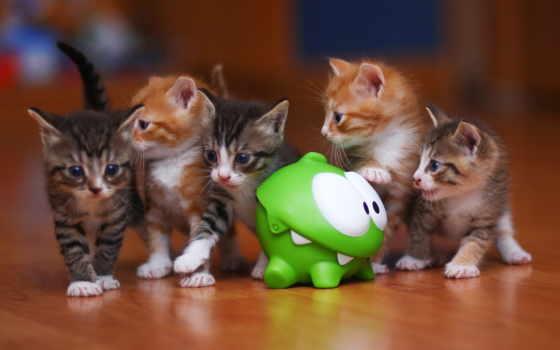 ням, am, котята, cut, веревка, котики, омь, nom, кот, красивые, картинка,