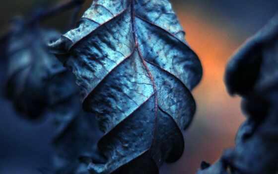 лист, blue, makryi, дерево, оттенок, природа, shirokoformatnyi, осень,