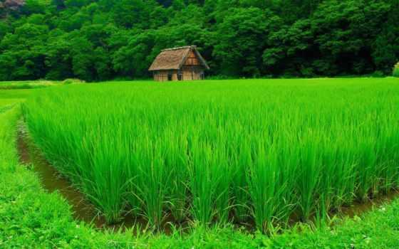 лес, поле