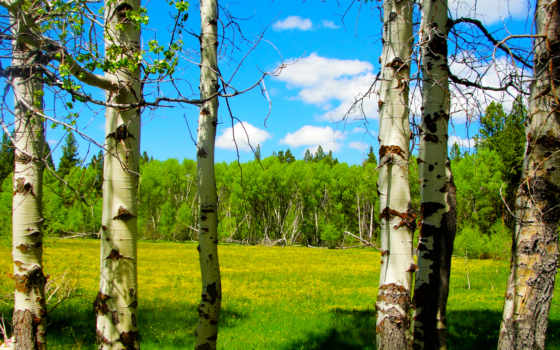 лес, цветы, деревья