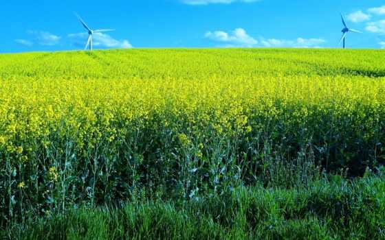 ветряки, поле, landscape, разрешением, цветы, dota, tagged, desktop,