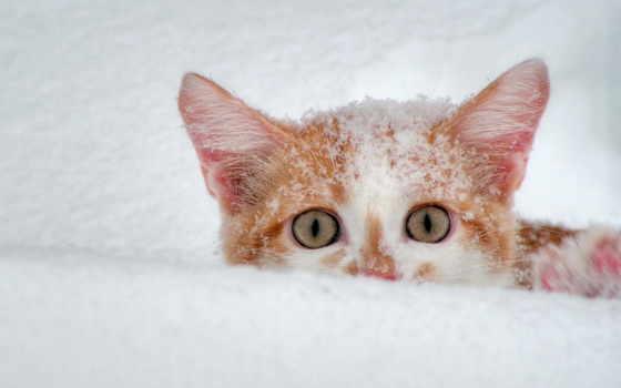 winter, аву, аватарки