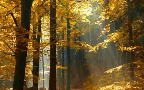 papier, peint, automne, design, yeda, foret, бутик, ligne, sur,
