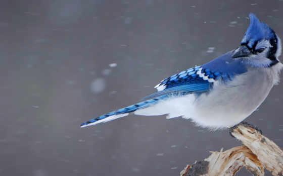 blue, джей, you, фон, free, bing,