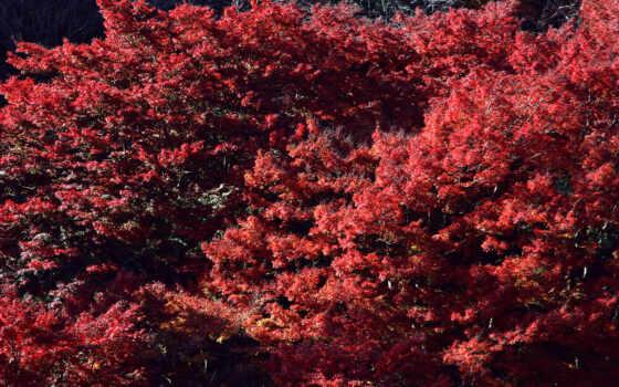 autumn, plant