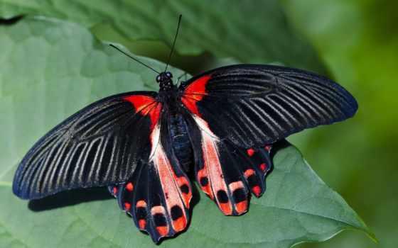 количество, мб, разными, бабочками, times,