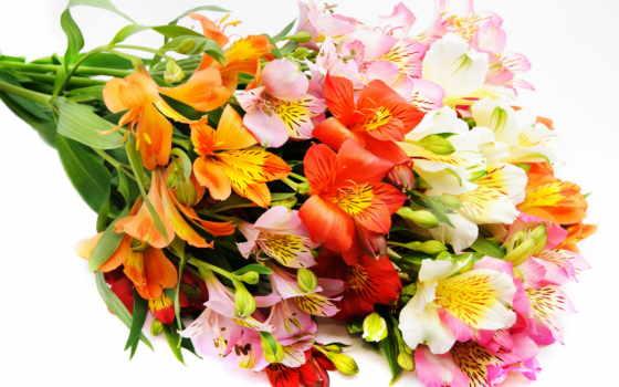 букет, цветы, красивые