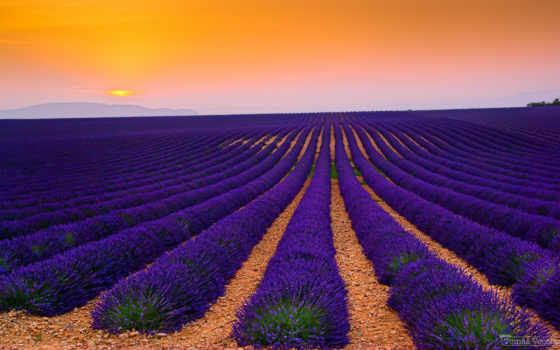 поле, цветы, landscape, lavender, пейзажи, трава, tulips, canes, природа,