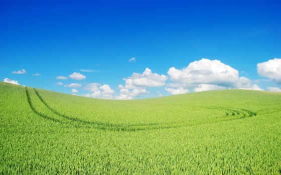 grassland, зелёный, landscape