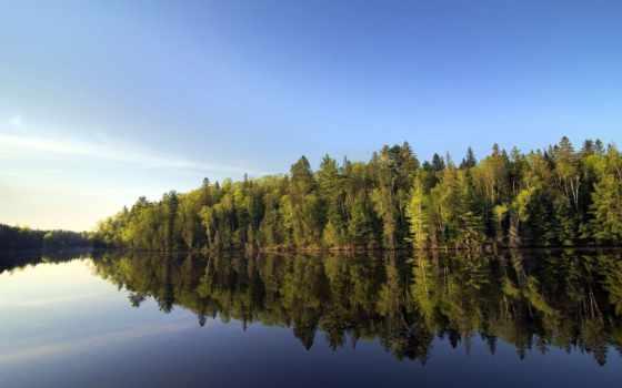 день, world, forestry