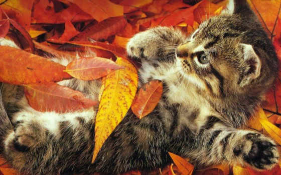 осень, веселая, об, день, cats, urka,
