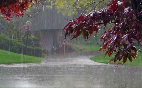 дождь, дерево, тег, есть, дорога, которых, листва, всех,