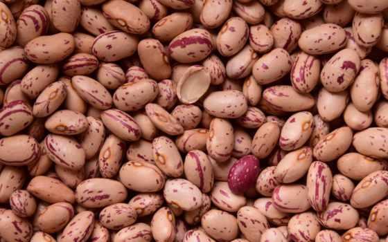 beans, quail, légumes, powder, free, еда, you, seeds, healthy, bean,