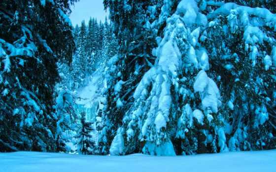 winter, ipad, природа, blue, снег, дерево, иней, permission, function, poehalus