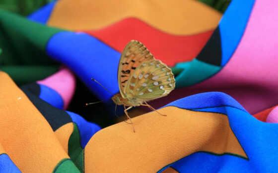 бабочка, méthode