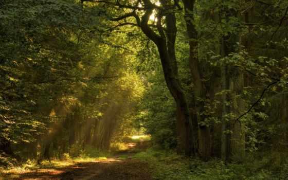 деревья, пейзажи, листья, леса, природа, тропинка, дорога, света, лучи, hallpic, найти,
