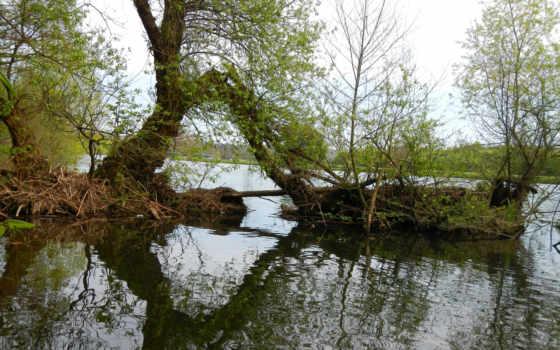 пруд, природа Фон № 38609 разрешение 2560x1600