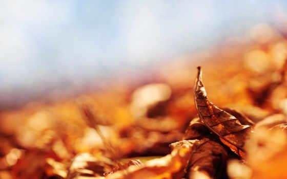 otoño, frases, imagenes, para, con, sobre, compartir, imágenes,