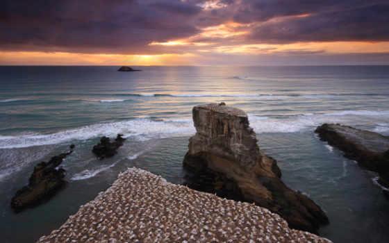 muriwai, колония, олушей, пляже, море,