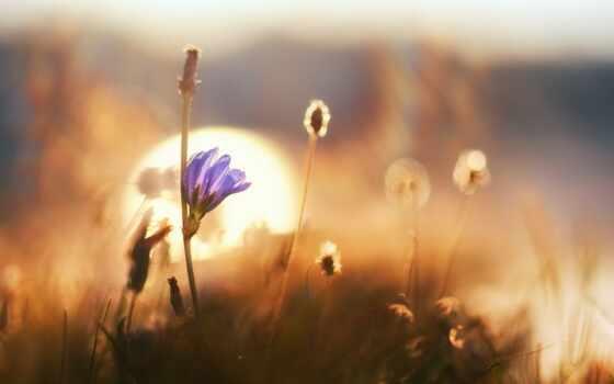cvety, утро, доброе, полевые, открытки, postcard, макро, заката, трава, рассвет, цветы,