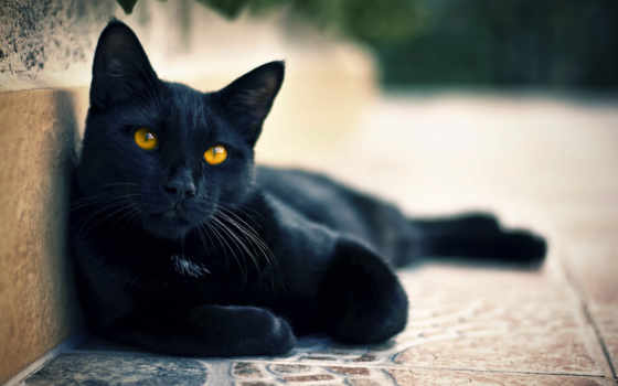 кошки, кот, свет, black, хорошем, смотрит, zhivotnye, взгляд, улица,