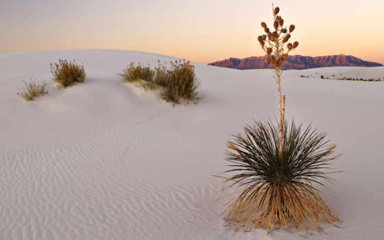 пустыня, растение, песок, white, миро, природа, website, sun
