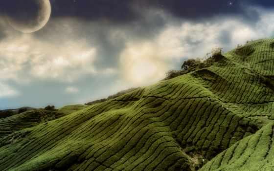фото, airenon, природа, чая, поле, fantasy