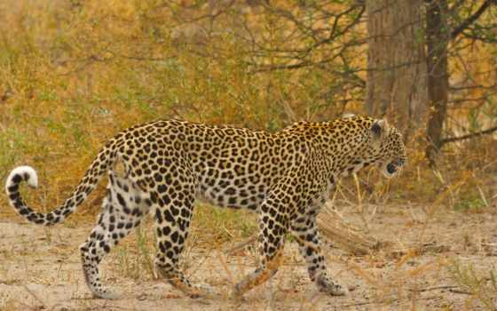 flickr, африка, животные