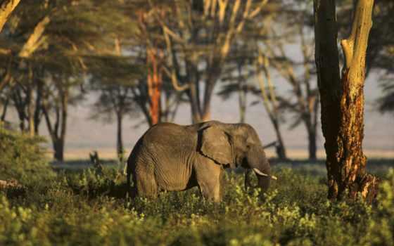zhivotnye, животных, африки