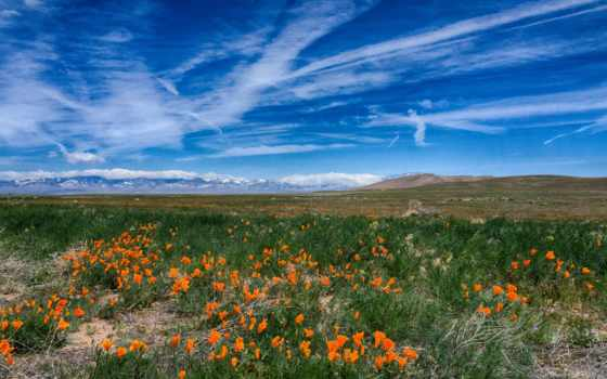 маки, небо, cvety, луг, трава, природа, oblaka, туман, ка,