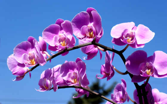 cvety, квіти, робочий, весна, stil, цветы, летние, сиреневый,