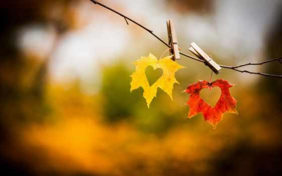 осень, загружено, коллекция, love, уже, лучшая, сердечки, природа,