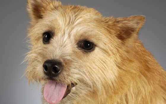 собака, portrait, собаки
