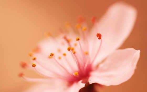 kevad, pantalla, fondos, tapeet, весна, lilled, taustapildid, tasuta, hommikul, kevadel,