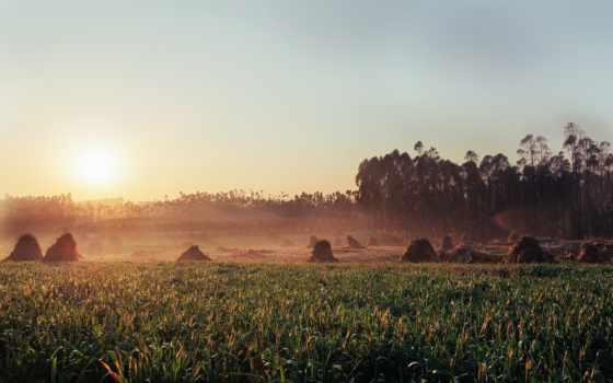 поле, трава, картинка, pantalla, сено, escritorio, fondo, sun,