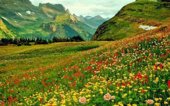 гора, you, clipart, цветы,