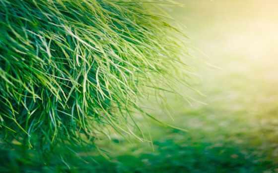 black, blue, зелёный, трава, grey, white, dark, цветы, silver