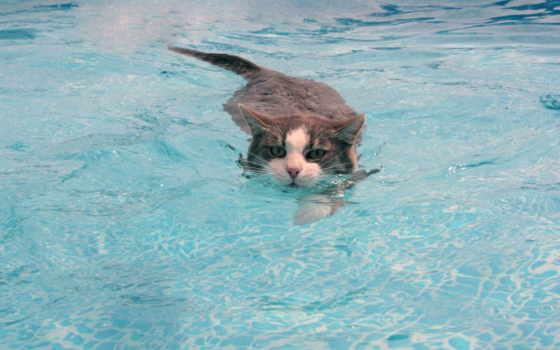 кот, воде, вода