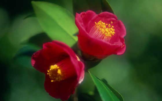 цветы, flowers Фон № 103251 разрешение 1920x1200