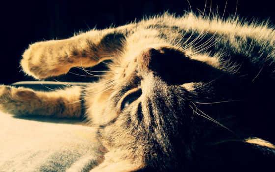 кот, кошки, ус, окрас, кис, мяу, свет, нояб, шерсть,