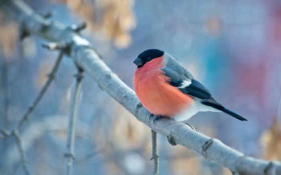 птицы, winter, природа, уже, лучшая, загружено, коллекция,