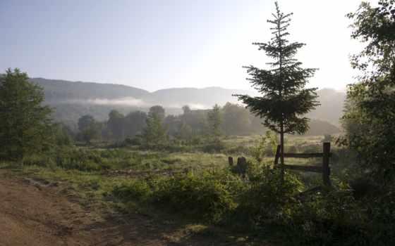 nat, лес, природа, фотообои, туман, горы, утро, фотопанно, pine,