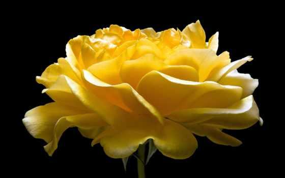 роза, лепестки, бутон Фон № 149192 разрешение 2048x1324