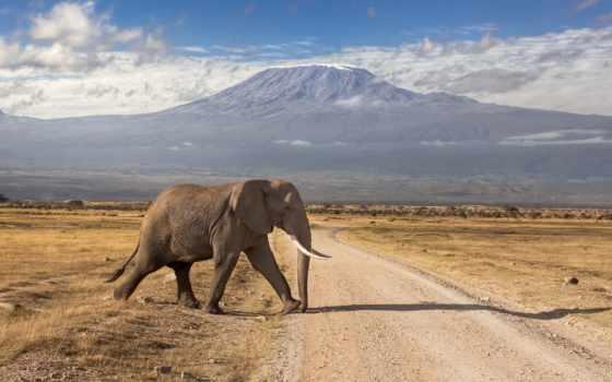 kilimanjaro, mount, amboseli, park, mt, national, день, африка,