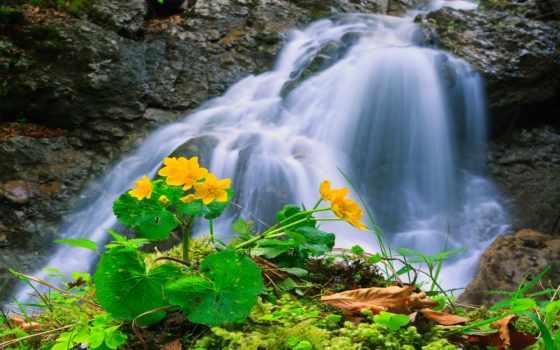 природа, flowers, waterfalls, desktop, водопад, трава, crag, изображение,