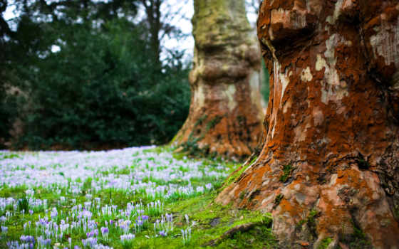 лес, лесу, cvety, весенние, природа, цветочки, full, картинка, нежные, сказок, чудес,
