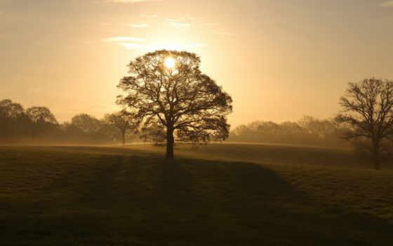 дерево, картинка, abyss, небо, семья, palm, smartphone, планшетный, fore