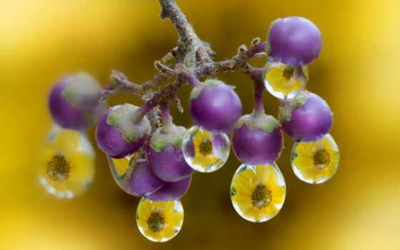 makryi, drop, природа, ягода, meal, water, alberto, panizza, narrow